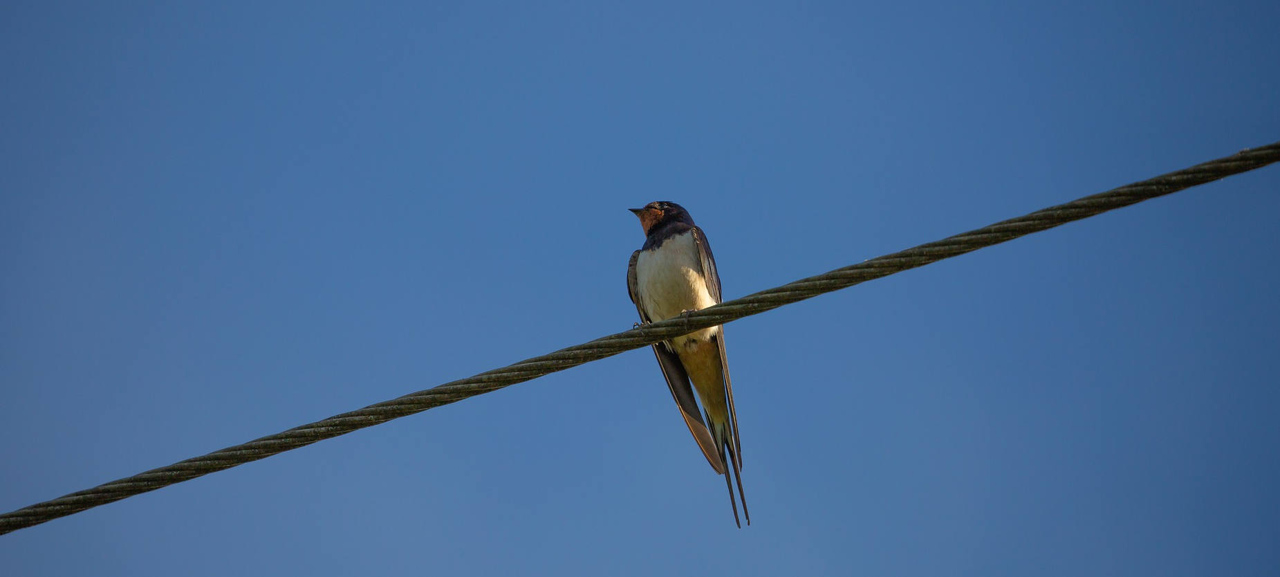 Vogel - Bird on the wire